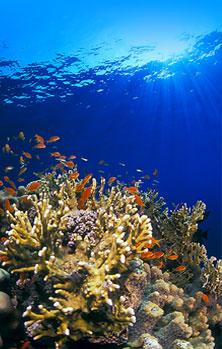 coral www.deep-south-diving.ru