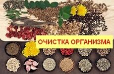 ochistka-org